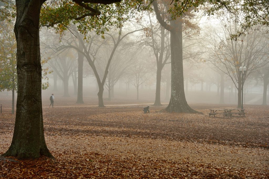 The Grove takes on an etherial glow from the early morning fog. Photo by Robert Jordan/Ole Miss Communications